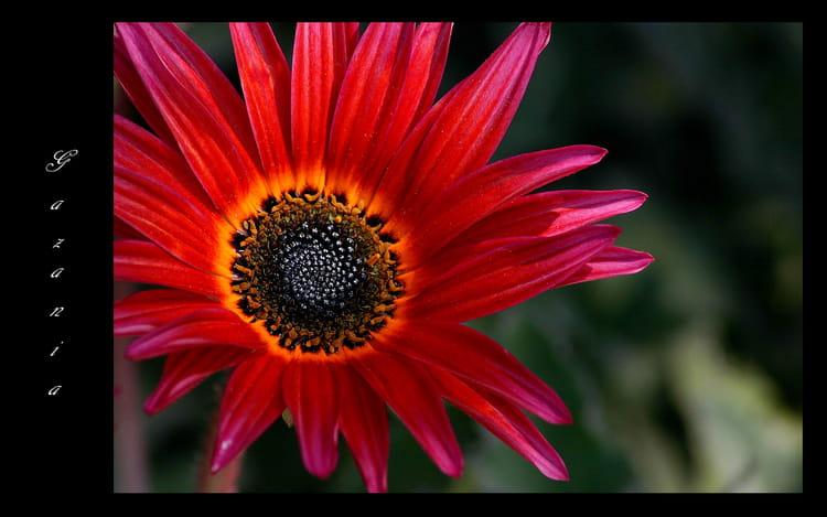 Fleur du soleil par ghislaine girardot sur l 39 internaute - Fleur du soleil ...