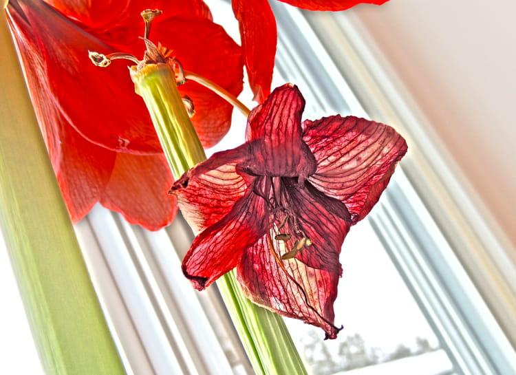 fleur fan e par sur l 39 internaute. Black Bedroom Furniture Sets. Home Design Ideas