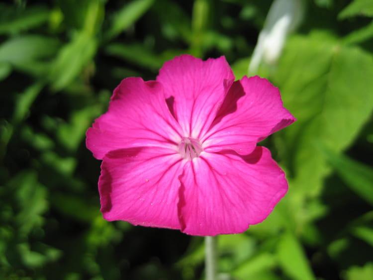 Fleur fushia par Caroline HUDE sur L'Internaute