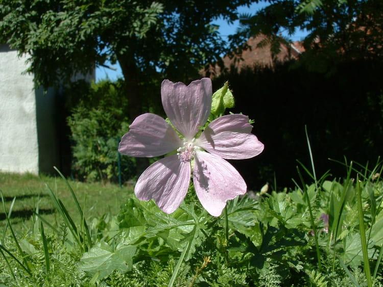 Fleur perdue dans le jardin par richard hermant sur l for Fleurs dans le jardin