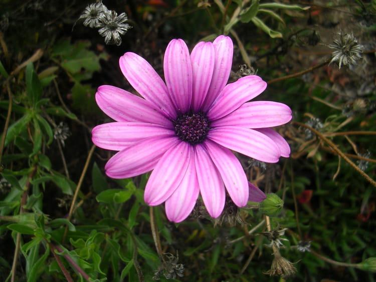 Fleur violette par gabriela steinitz sur l 39 internaute - Image fleur violette ...