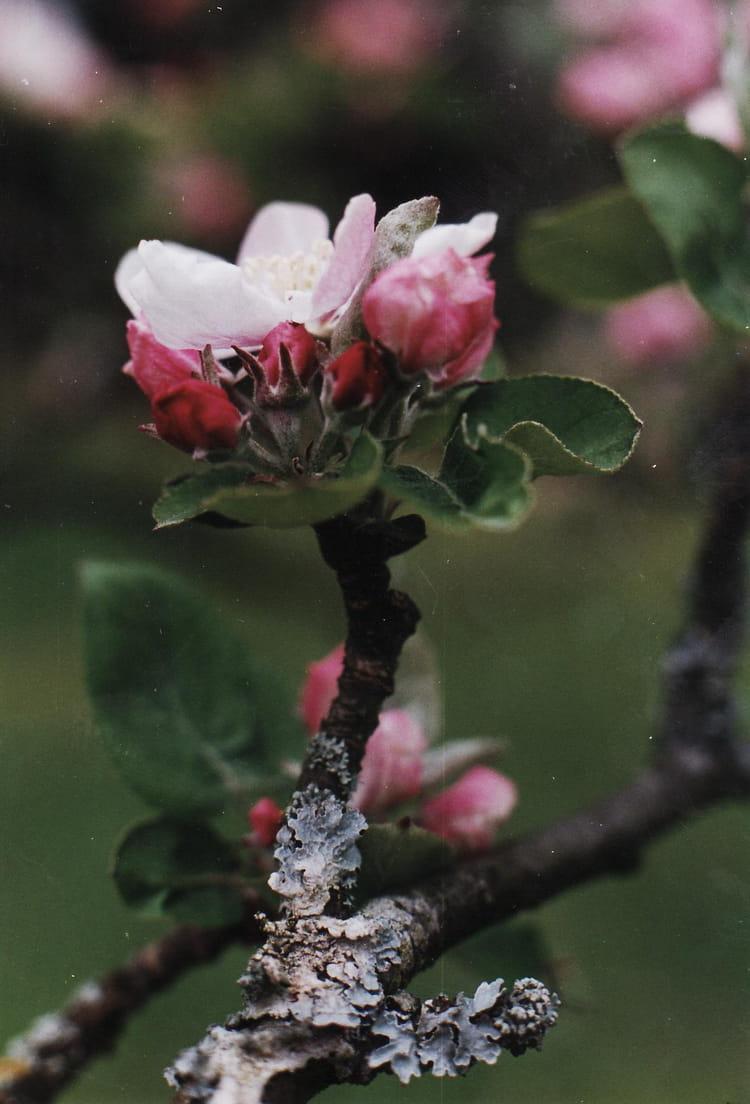 Fleurs et plantes par bernadette wiszniewski sur l 39 internaute for Catalogue fleurs et plantes