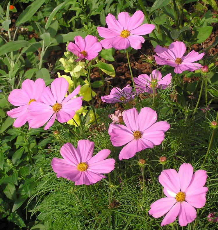 Fleurs vivaces par g rard robert sur l 39 internaute for Fleurs vivaces rustiques