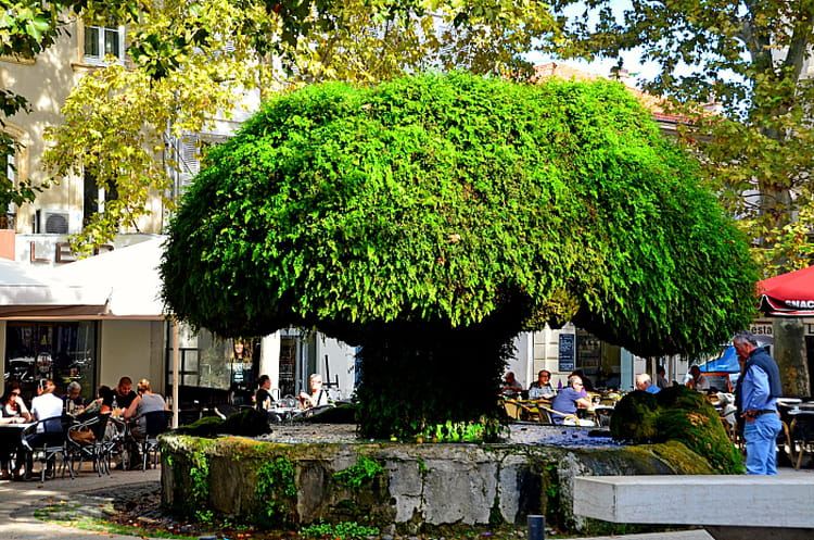 fontaine moussue salon de provence par philippe manael