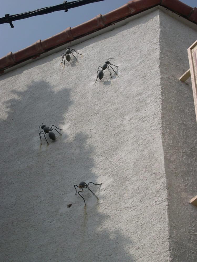 fourmis g antes par daniel aujon sur l 39 internaute. Black Bedroom Furniture Sets. Home Design Ideas