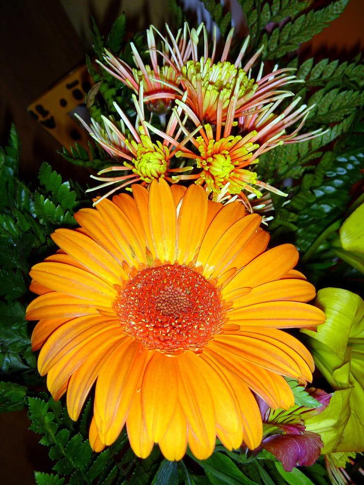 Gerbera et chrysanth me par christian aym sur l 39 internaute - Chrysantheme entretien ...