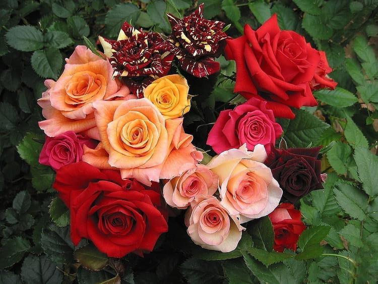 grand bouquet de roses par jean pierre marro sur l 39 internaute. Black Bedroom Furniture Sets. Home Design Ideas