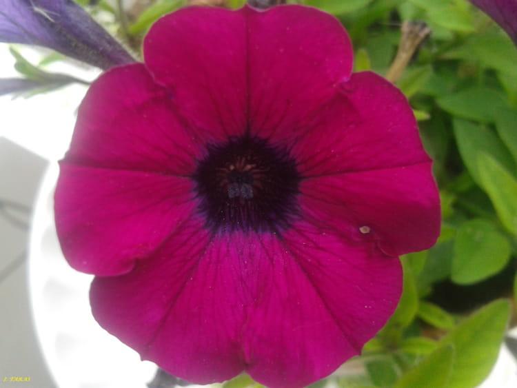 Int rieur d 39 une fleur par isabelle taras sur l 39 internaute - Interieur d une fleur ...