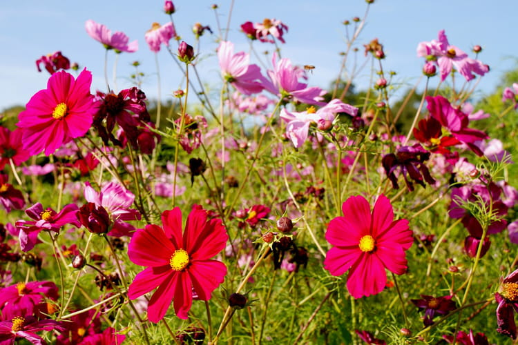 Jach re fleurie par pascal rouaud sur l 39 internaute - Fleur de jachere ...