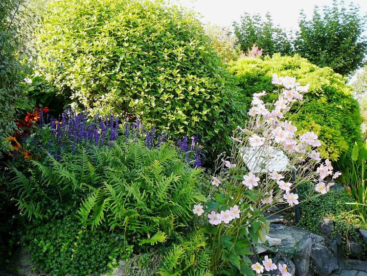 Jardin botanique par jacqueline dubois sur l 39 internaute for Bd du jardin botanique