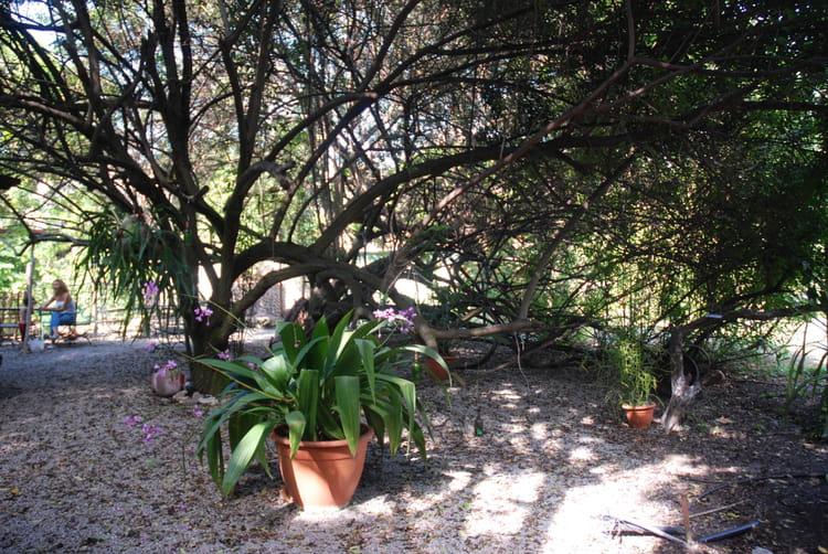 Jardin botanique par genevieve lapoux sur l 39 internaute for Bd du jardin botanique