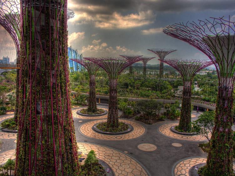 Jardin de la baie de singapour par pascal desfougeres sur for Jardin botanique singapour