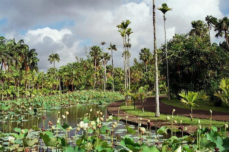 Jardin des pamplemousses par fr d ric lalande sur l 39 internaute for Jardin definition