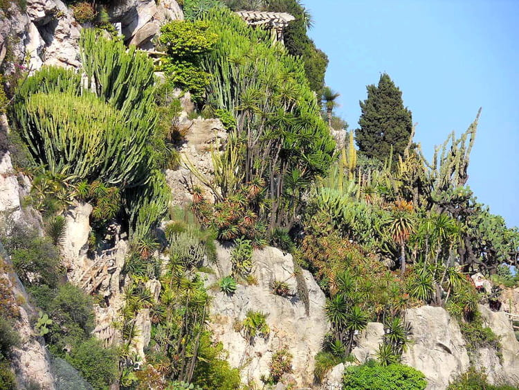 Jardin exotique 4 par jean pierre marro sur l 39 internaute - Photo jardin exotique ...