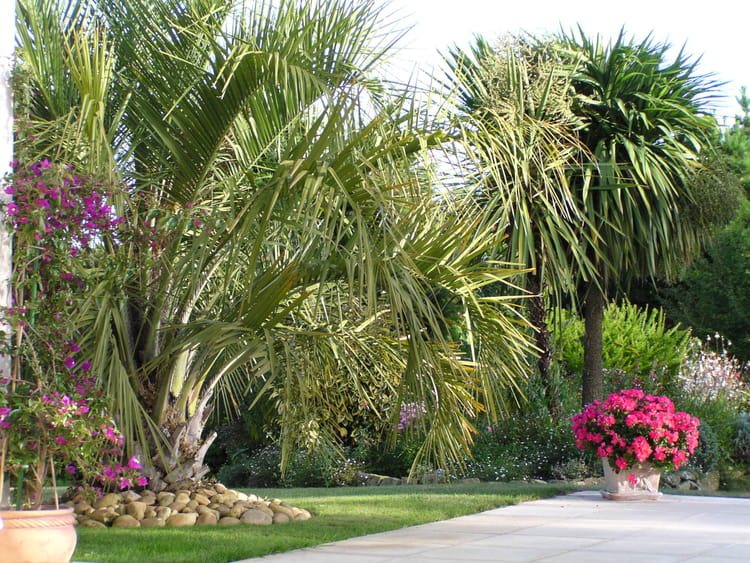 Emejing Image Jardin Tropical Images - Design Trends 2017 ...