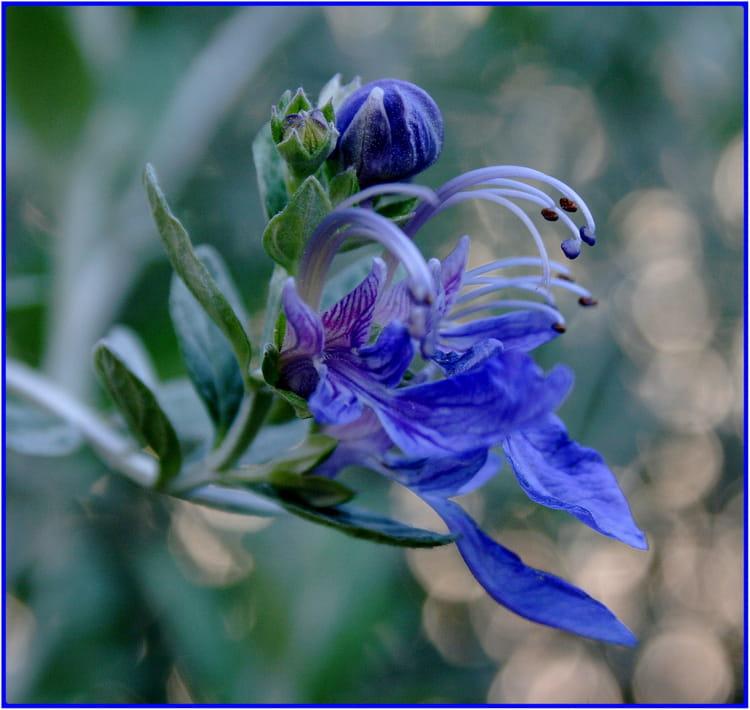 jolie petite fleur bleue par marie jose derel sur l 39 internaute. Black Bedroom Furniture Sets. Home Design Ideas