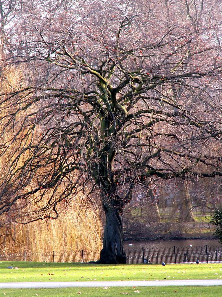 L'arbre qui pleure par Gérald BITSCHY sur L'Internaute