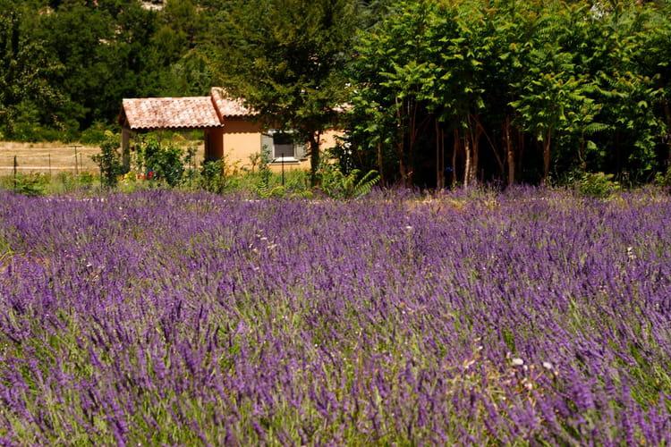 La cabane au fond du jardin par gilbert abismil sur l for Au fond du jardin du michel