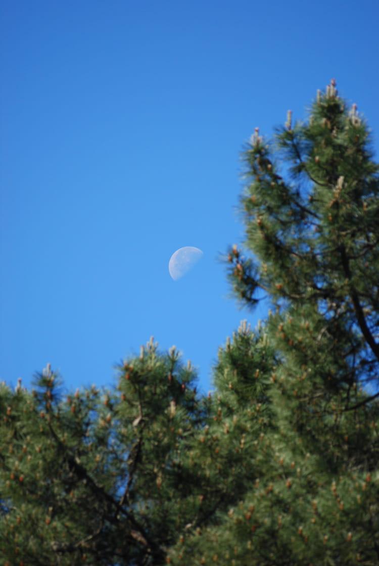 voir la lune en plein jour