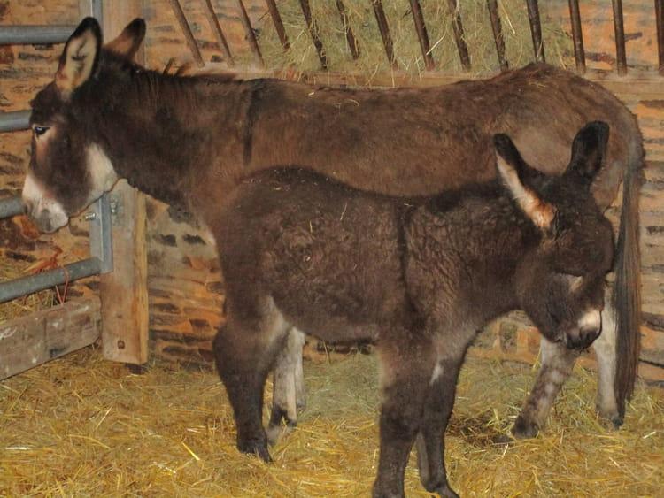 Le b b ne avec sa maman par christine letessier sur l - Bebe de l ane ...