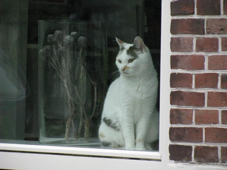 le chat la fen tre par anne labroue sur l 39 internaute