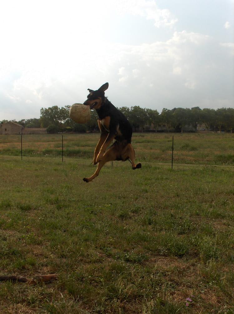 Chien Volant le chien volant par cyrielle croisé sur l'internaute