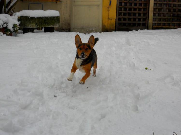Chien Volant le chien volant! par juliette clech sur l'internaute