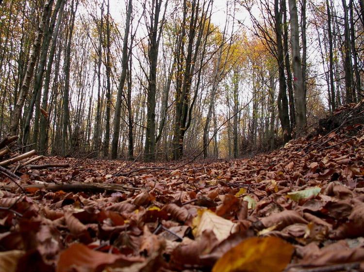 Le fond des bois par laurent beloin sur l 39 internaute for Les fonds des photos
