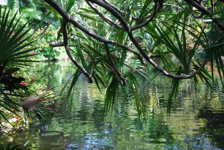 Le jardin botanique de grand bahamas par genevieve lapoux for Bd du jardin botanique