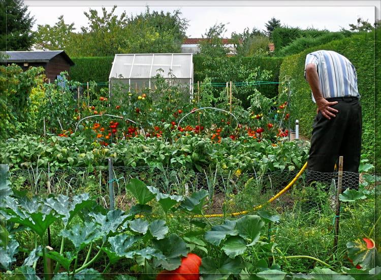 Le jardin extraordinaire par serge agombart sur l 39 internaute for Jardin extraordinaire