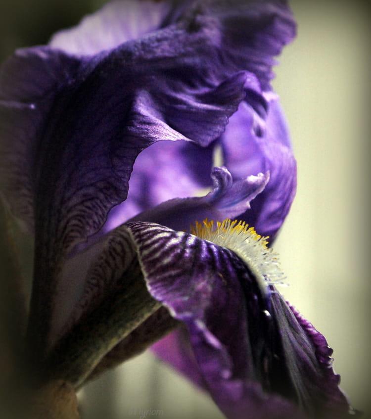 Le langage des fleurs par sur l 39 internaute - Langage des fleurs iris ...