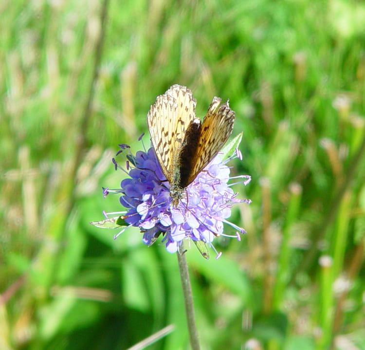 Le papillon et la fleur par sur l 39 internaute - Image papillon et fleur ...