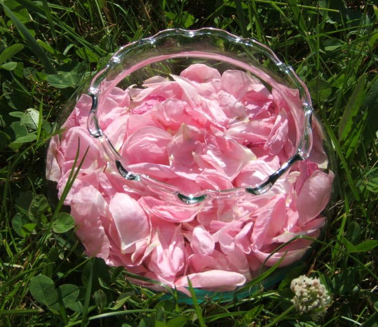 le pot aux roses par agn 232 s porcherot sur l internaute