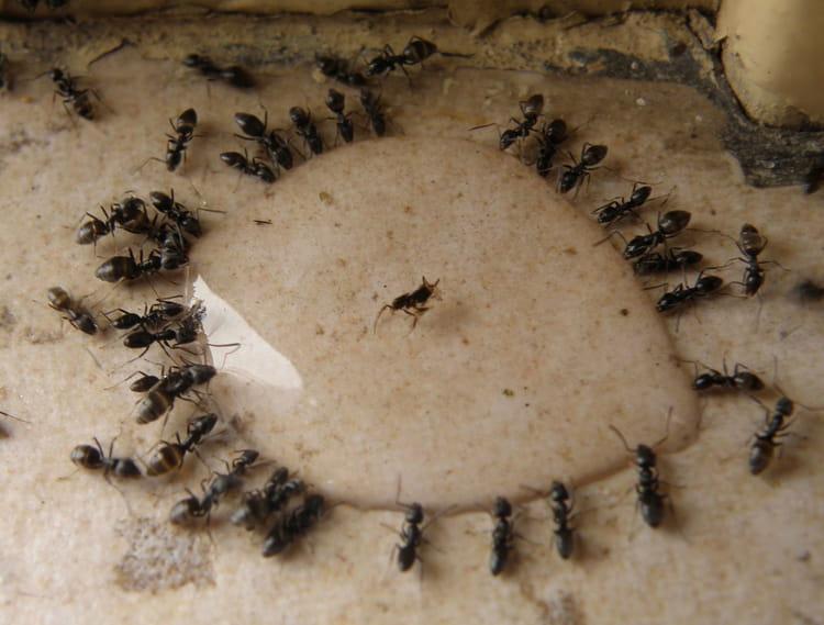 le repas des fourmis par lucien bermudes sur l 39 internaute. Black Bedroom Furniture Sets. Home Design Ideas