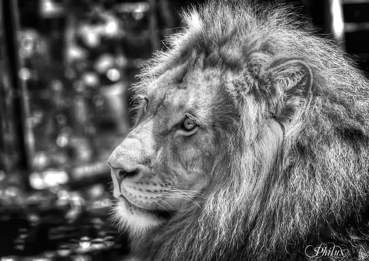 Le roi lion par philippe coffe sur l 39 internaute - Voir le roi lion ...