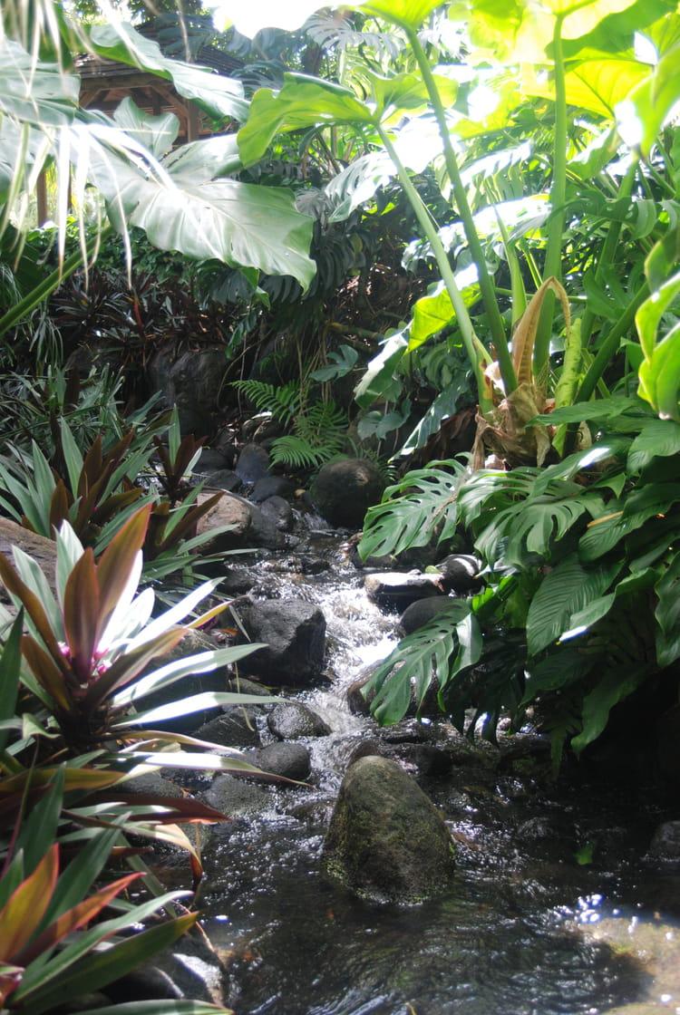 Le Ruisseau Dans Le Jardin Botanique Par Genevieve Lapoux Sur L