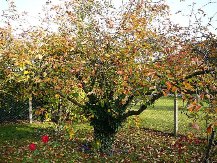 Le vieux pommier de mon jardin avec son habit d 39 automne par jacqueline dubois sur l 39 internaute - L arbre le pommier ...