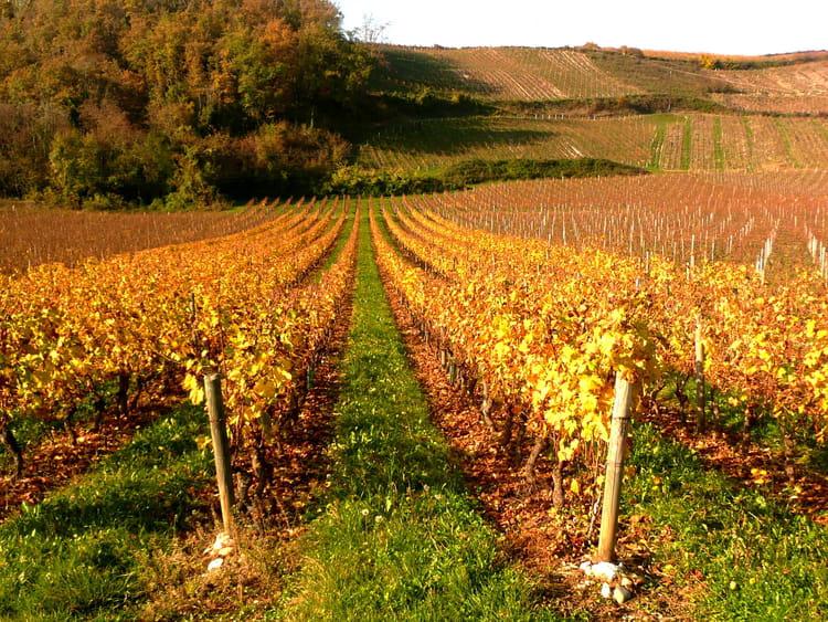 L 39 automne et ses couleurs 2 par josiane ferret sur l 39 internaute - L automne et ses couleurs ...