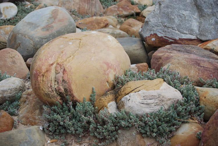 Les gros cailloux du cap de bonne esp rance par genevieve for Gros cailloux decoratif