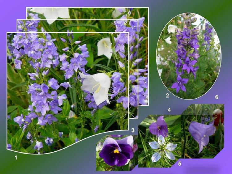 les petites fleurs bleues du mois de juin par jacqueline dubois sur l 39 internaute. Black Bedroom Furniture Sets. Home Design Ideas