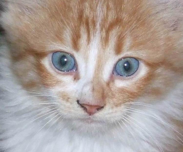 Les yeux du chaton par mohamed larbi bouguira sur l 39 internaute - Enlever les puces sur un chaton ...