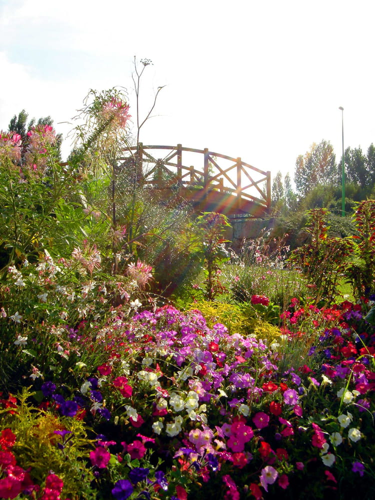 Massif fleuri par christian aym sur l 39 internaute for Massif fleurs