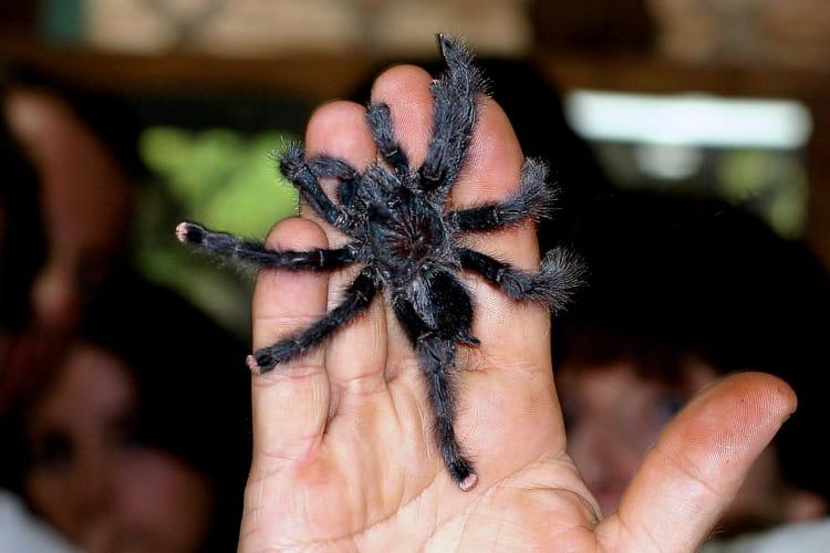 Pour éloigner les araignées Matoutou-2742883564-936488