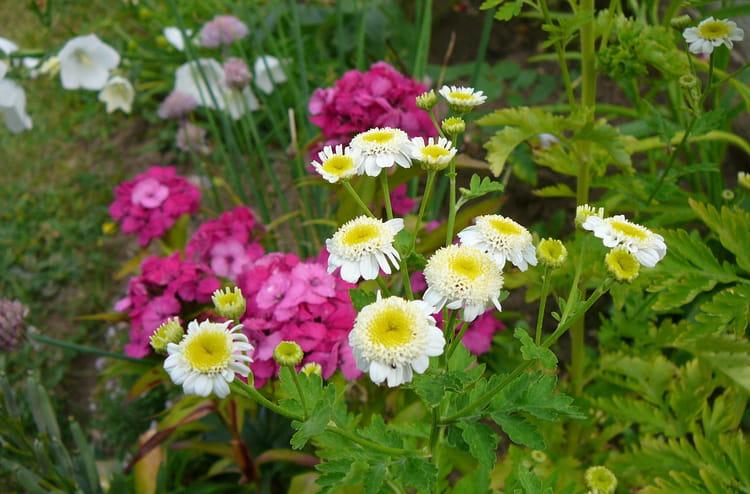 m li m lo de fleurs dans mon jardin par jacqueline dubois sur l 39 internaute. Black Bedroom Furniture Sets. Home Design Ideas