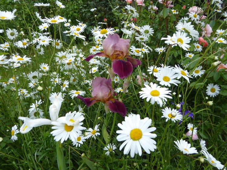 Mon fouillis de fleurs dans le jardin 1 par jacqueline for Fleurs dans le jardin