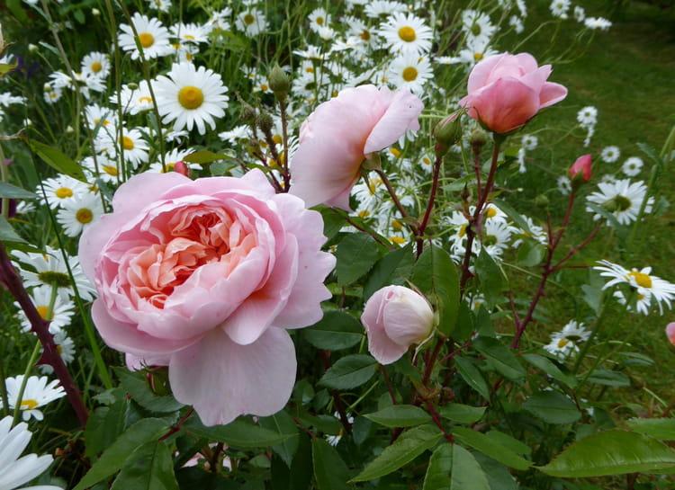 Mon fouillis de fleurs dans le jardin 2 par jacqueline for Fleurs dans le jardin