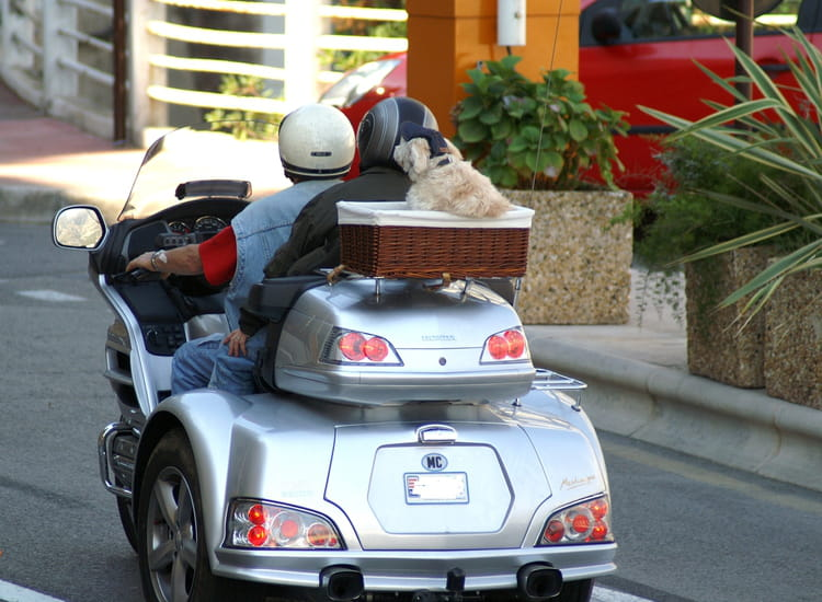 moto de famille avec chien par jacqueline joly sur l. Black Bedroom Furniture Sets. Home Design Ideas
