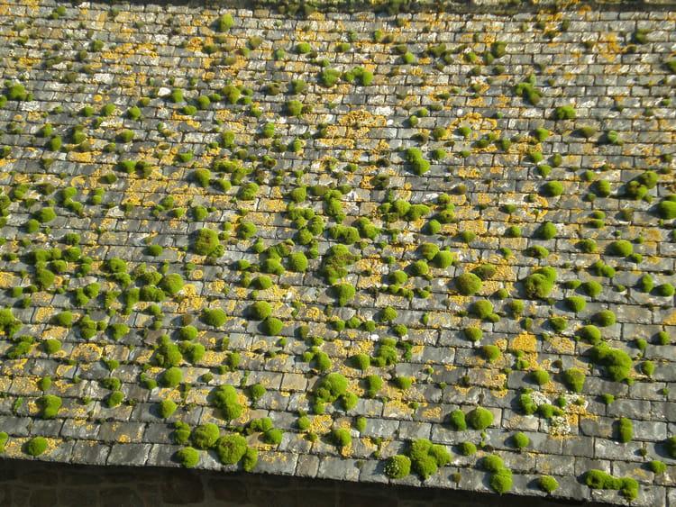 mousse sur le toit par janine moreau sur l 39 internaute. Black Bedroom Furniture Sets. Home Design Ideas