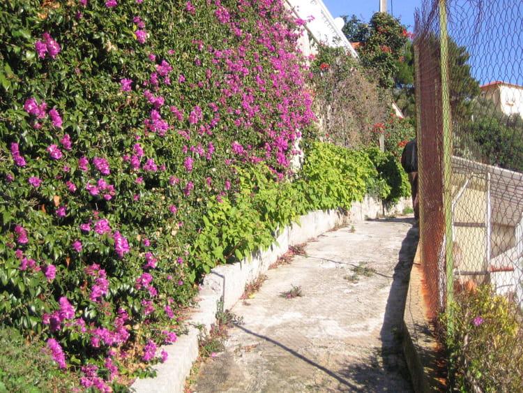 mur de fleurs par baptiste riviere sur l 39 internaute. Black Bedroom Furniture Sets. Home Design Ideas