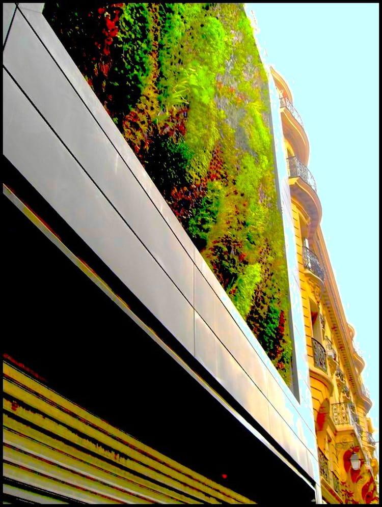 Mur v g tal immeuble haussmannien par yvette gogue sur l 39 internaute - Immeuble vegetal ...